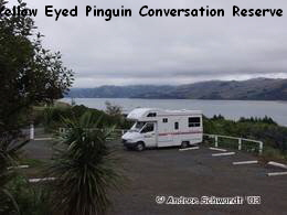Yellow Eyed Pinguin Conversation Reserve